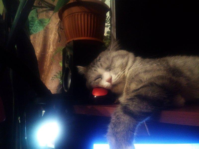 Кот Бакс спит